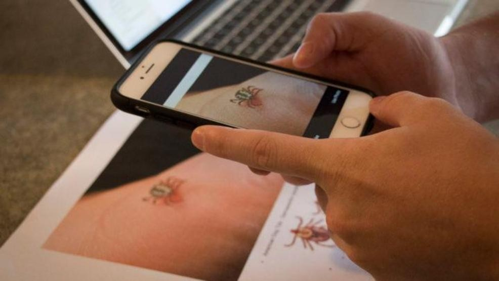 New app can ID harmful ticks with photo recognition | WGME