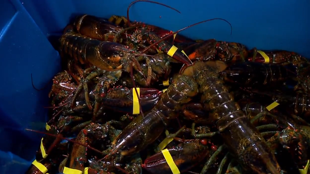 Maine Bill To Ease Restrictions On Trucking Of Live Lobster Wgme