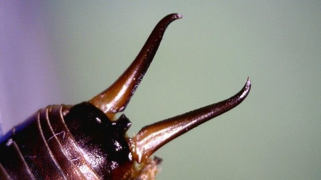 How to get rid of earwigs, one of the scariest bugs of lore | WGME
